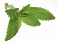 Sweet Green Fields to expand stevia crop in NC and GA