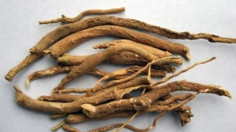 ashwagandha research paper Scientific cultivation of ashwagandha (withania somnifera)  ashwagandha (withania somnifera dunal) belongs to the family solanaceae having chromosome number 2n = 48  research paper prawal.
