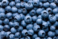 Blueberry powders shows endothelial benefits: Human data
