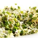 HiActives powdered broccoli sprouts maintain nutritional potency: Futureceuticals