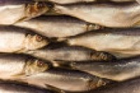 Omega Protein's Atlantic menhaden catch to be cut by 20%