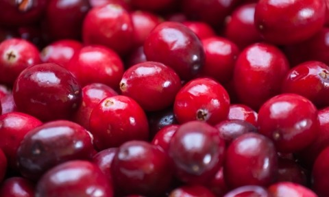 cranberry industry analysis Cranberries - zombie analysis the research also indicates that the cranberry industry has seen consistent growth in the recent past and that these bogs.
