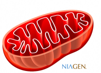 Niagen supports mitochondrial health, ChromaDex says.