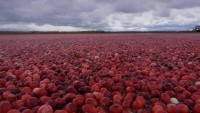 Fruit d'Or gets 'health maintenance' claim in Canada for cranberry seed oil