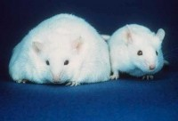 "Nestlé: ""We use animals as part of our medical food research programme..."